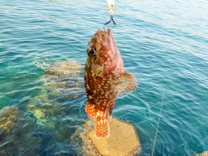 その後はメタルジグでアナハゼ・サバ・ガシラを釣る3