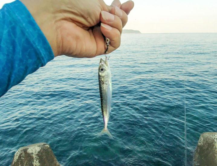 その後はメタルジグでアナハゼ・サバ・ガシラを釣る2