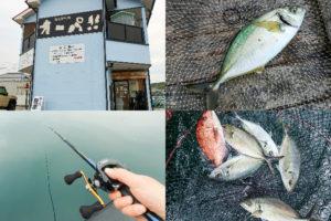 大阪の海上釣り堀オーパ!!で好釣果|シマアジのアタリがあった時のアワセ方