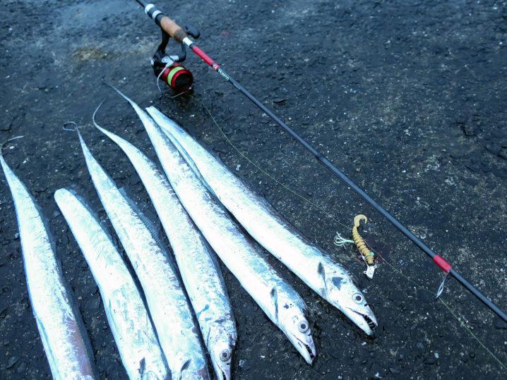 朝までに6匹のタチウオを釣る事ができました