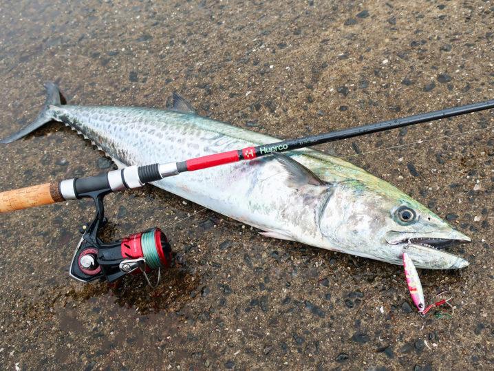 81センチの【サワラ】を釣り上げる!